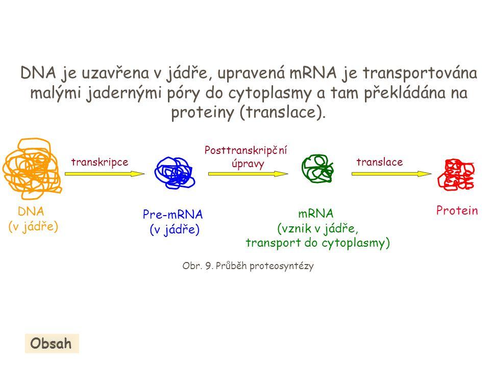 DNA je uzavřena v jádře, upravená mRNA je transportována malými jadernými póry do cytoplasmy a tam překládána na proteiny (translace).
