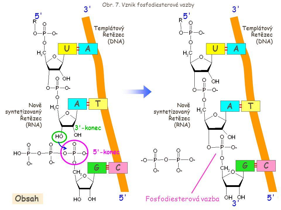 Obr. 7. Vznik fosfodiesterové vazby