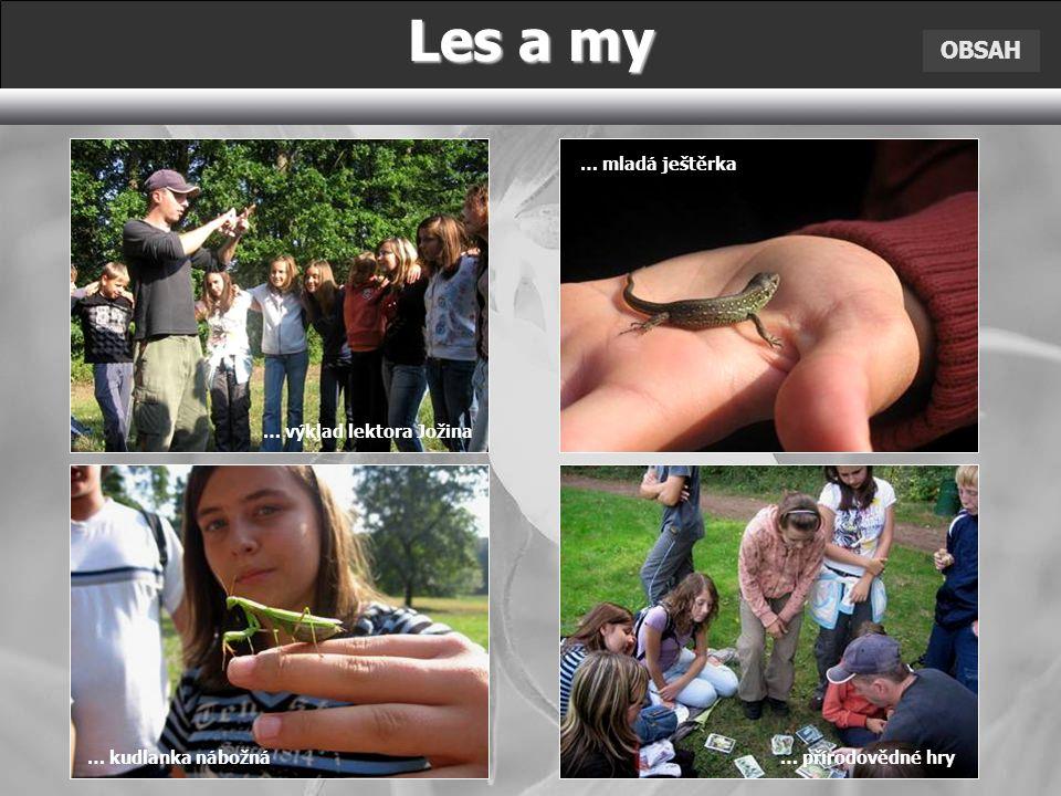Les a my OBSAH … mladá ještěrka … výklad lektora Jožina