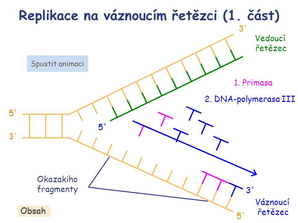 Replikace na váznoucím řetězci (1. část)