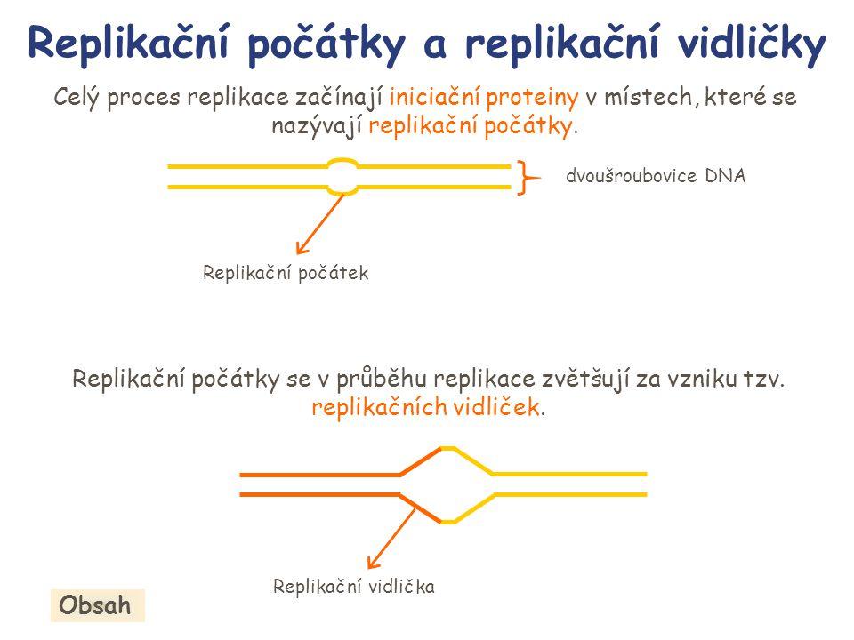 Replikační počátky a replikační vidličky