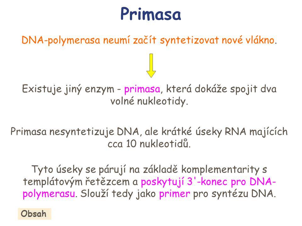 DNA-polymerasa neumí začít syntetizovat nové vlákno.