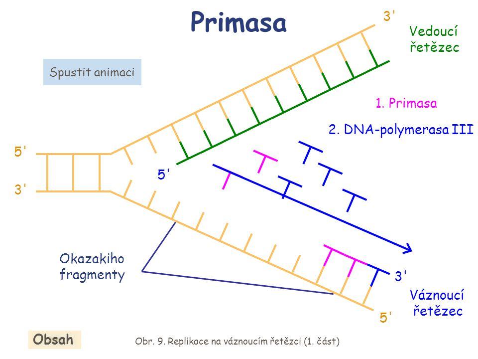 Obr. 9. Replikace na váznoucím řetězci (1. část)