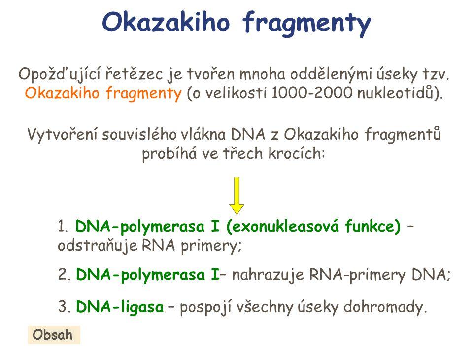 Okazakiho fragmenty Opožďující řetězec je tvořen mnoha oddělenými úseky tzv. Okazakiho fragmenty (o velikosti 1000-2000 nukleotidů).