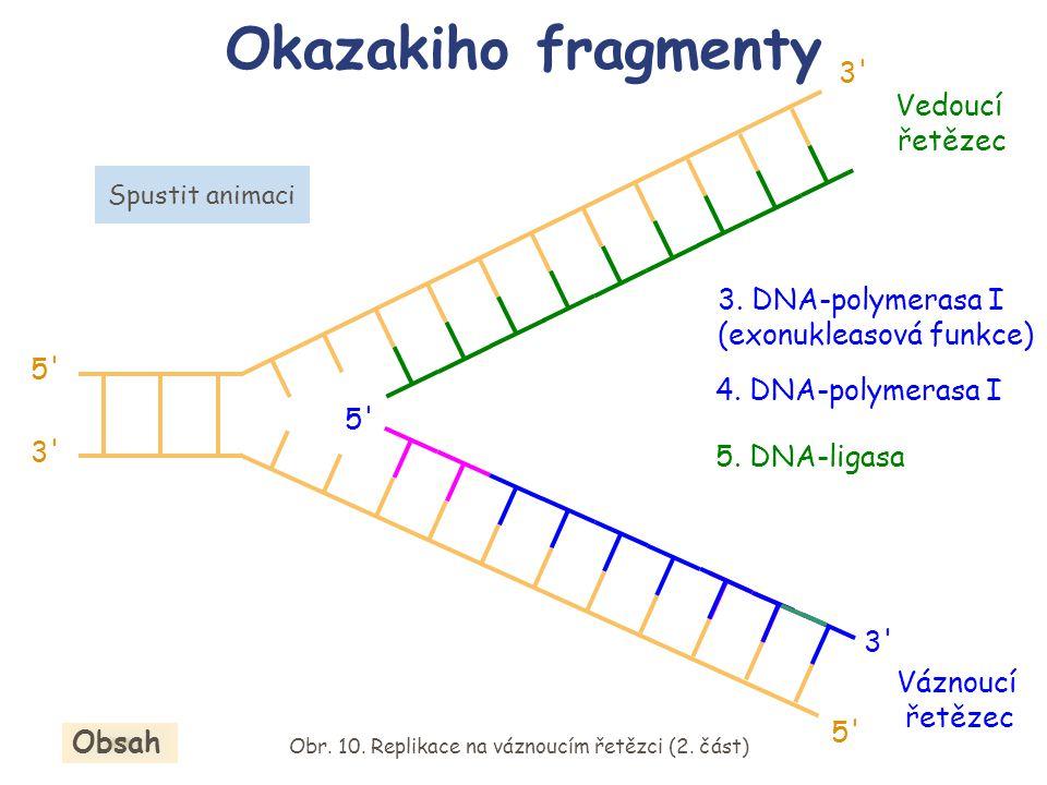 Obr. 10. Replikace na váznoucím řetězci (2. část)