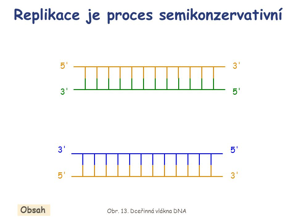 Replikace je proces semikonzervativní