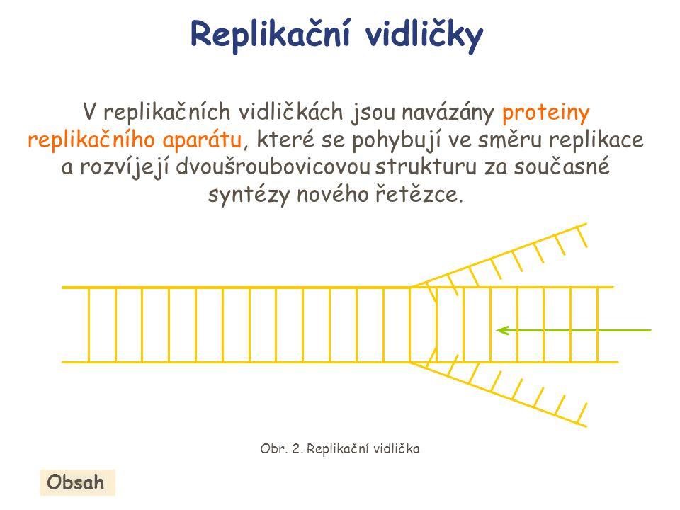 Obr. 2. Replikační vidlička