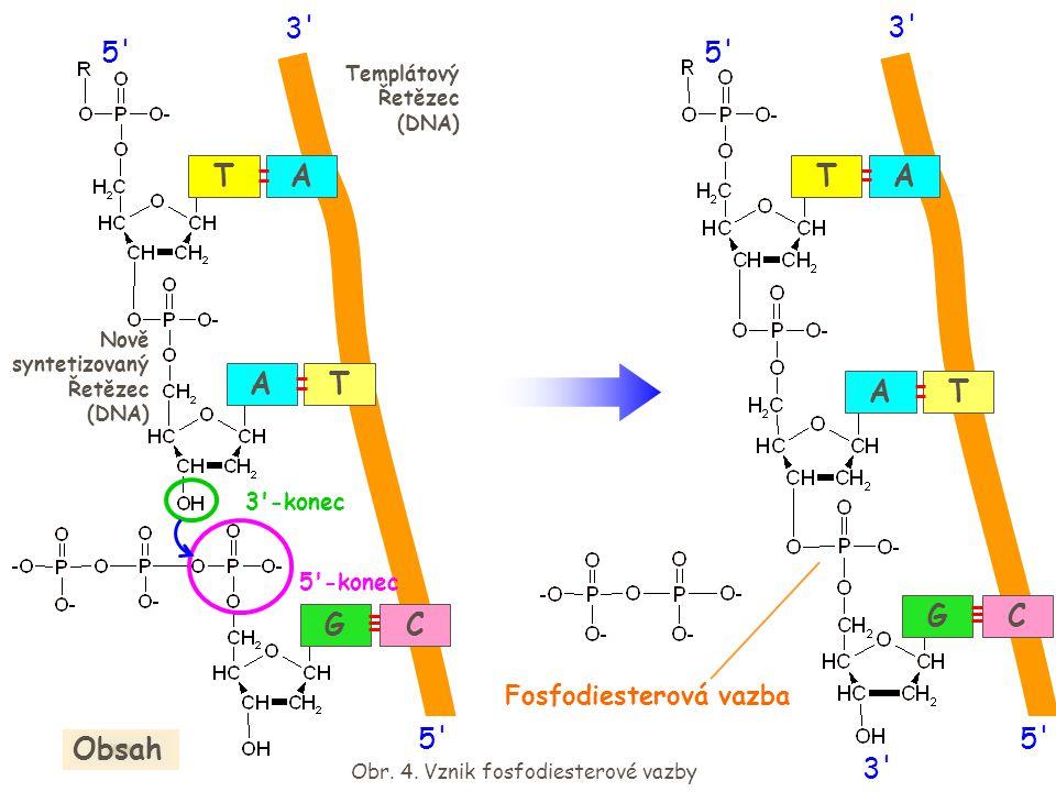 Obr. 4. Vznik fosfodiesterové vazby