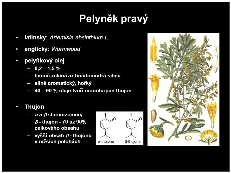 Pelyněk pravý latinsky: Artemisia absinthium L. anglicky: Wormwood