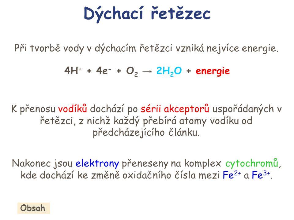 Při tvorbě vody v dýchacím řetězci vzniká nejvíce energie.