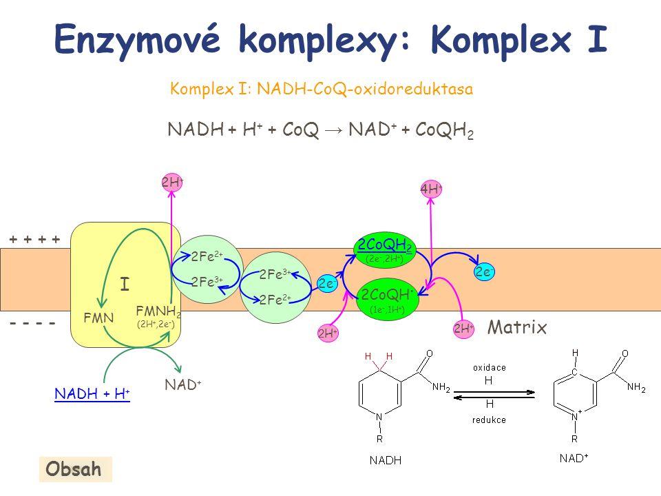 Enzymové komplexy: Komplex I