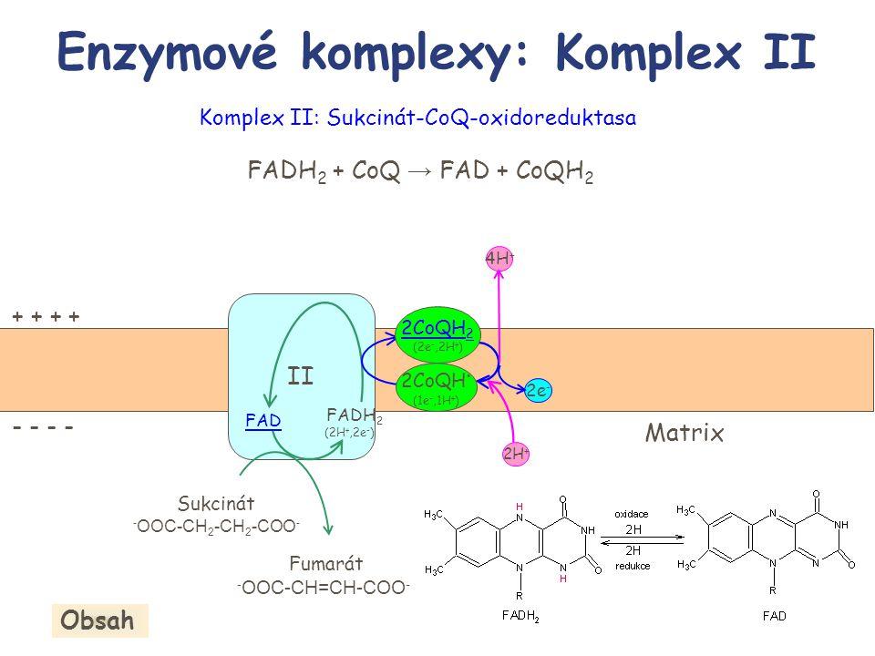 Enzymové komplexy: Komplex II