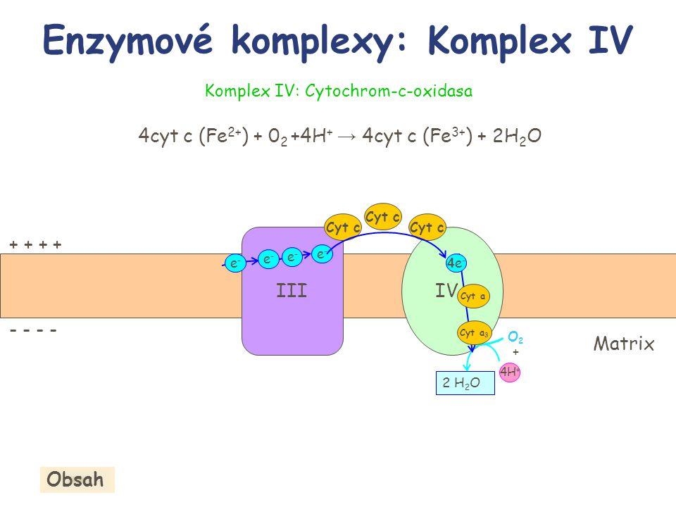 Enzymové komplexy: Komplex IV