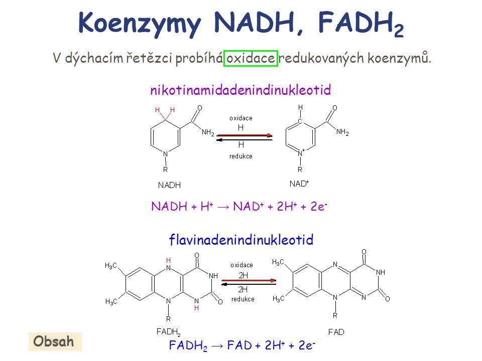 Koenzymy NADH, FADH2 V dýchacím řetězci probíhá oxidace redukovaných koenzymů. nikotinamidadenindinukleotid.