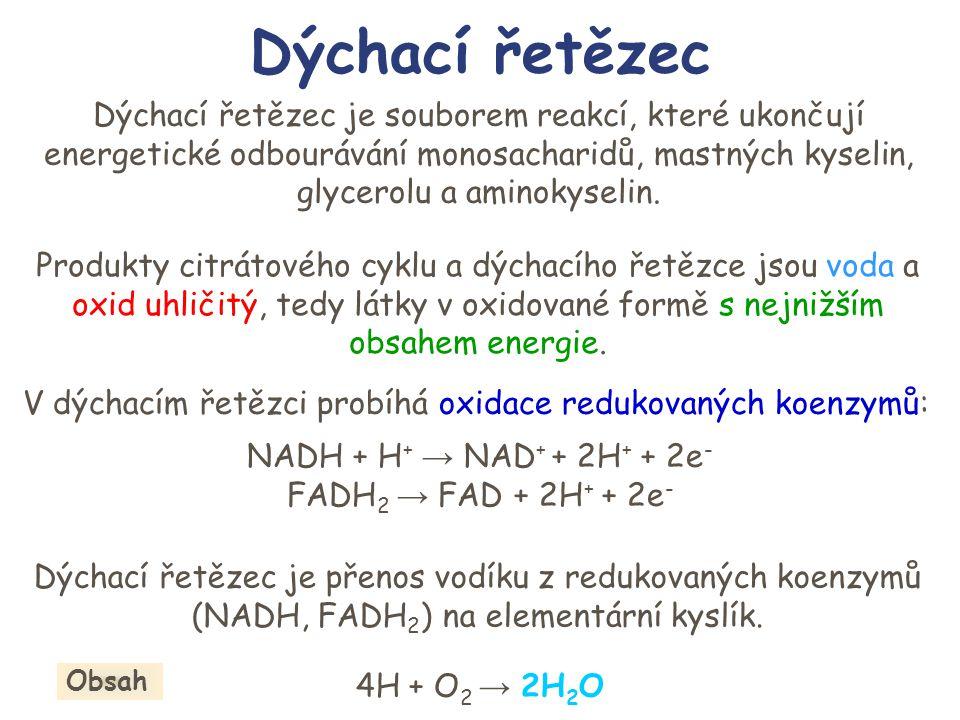 V dýchacím řetězci probíhá oxidace redukovaných koenzymů: