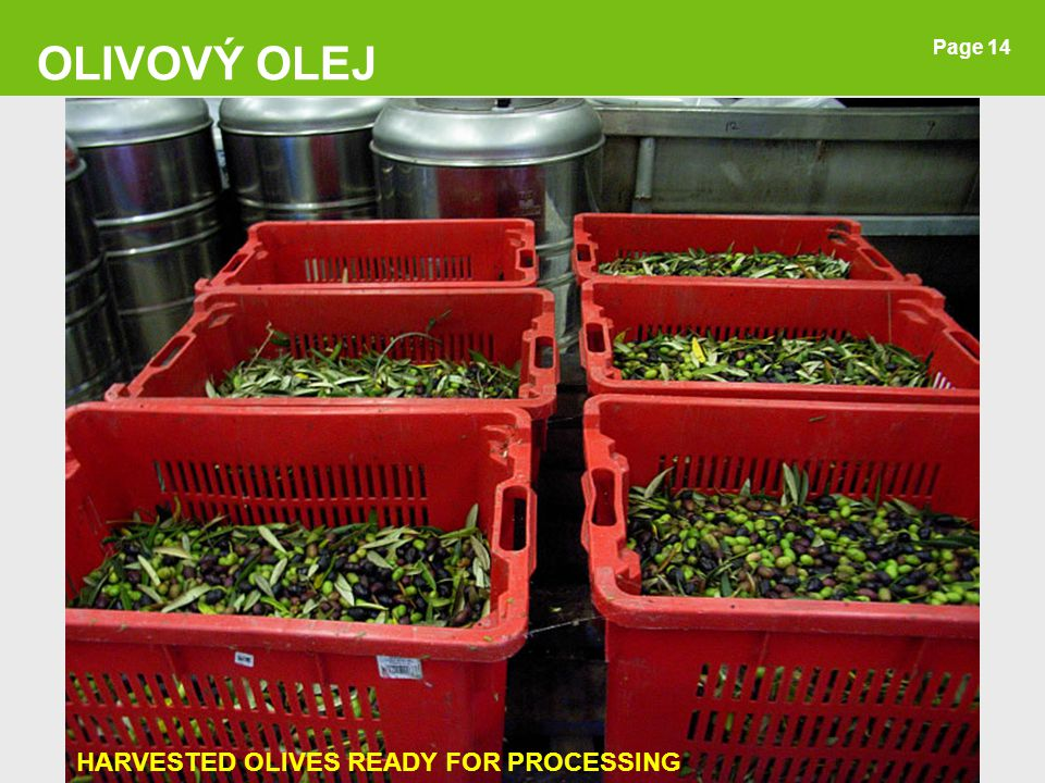 OLIVOVÝ OLEJ Page 14 HARVESTED OLIVES READY FOR PROCESSING 14