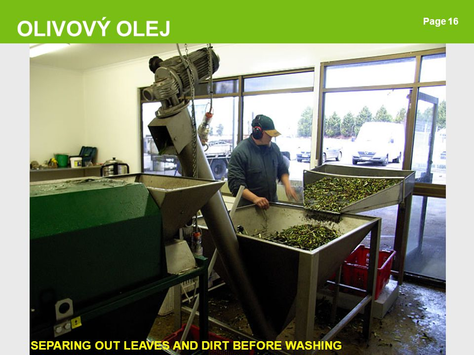 OLIVOVÝ OLEJ Page 16 SEPARING OUT LEAVES AND DIRT BEFORE WASHING 16