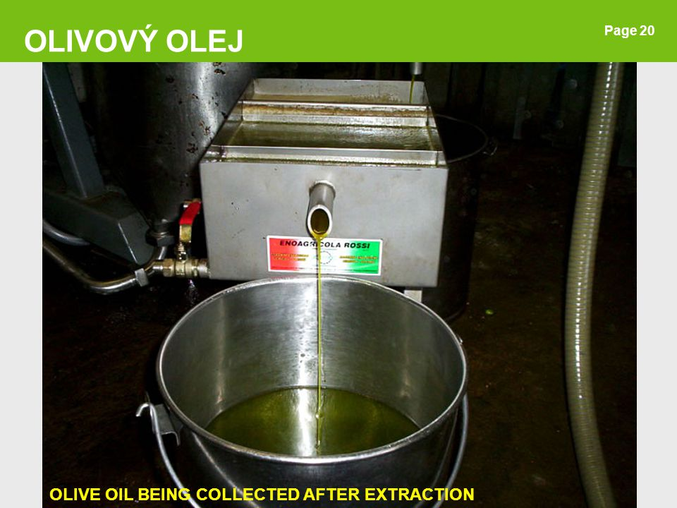 OLIVOVÝ OLEJ Page 20 OLIVE OIL BEING COLLECTED AFTER EXTRACTION 20