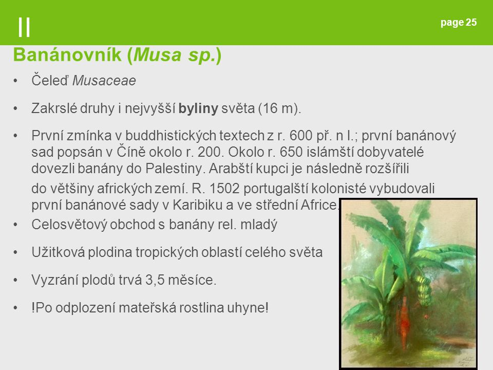 II Banánovník (Musa sp.) Čeleď Musaceae