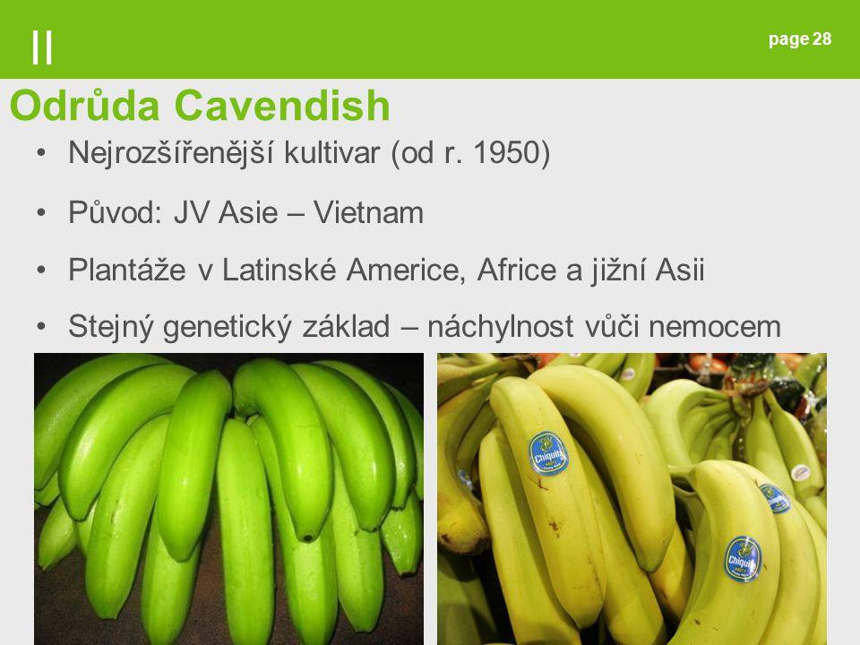 II Odrůda Cavendish Nejrozšířenější kultivar (od r. 1950)