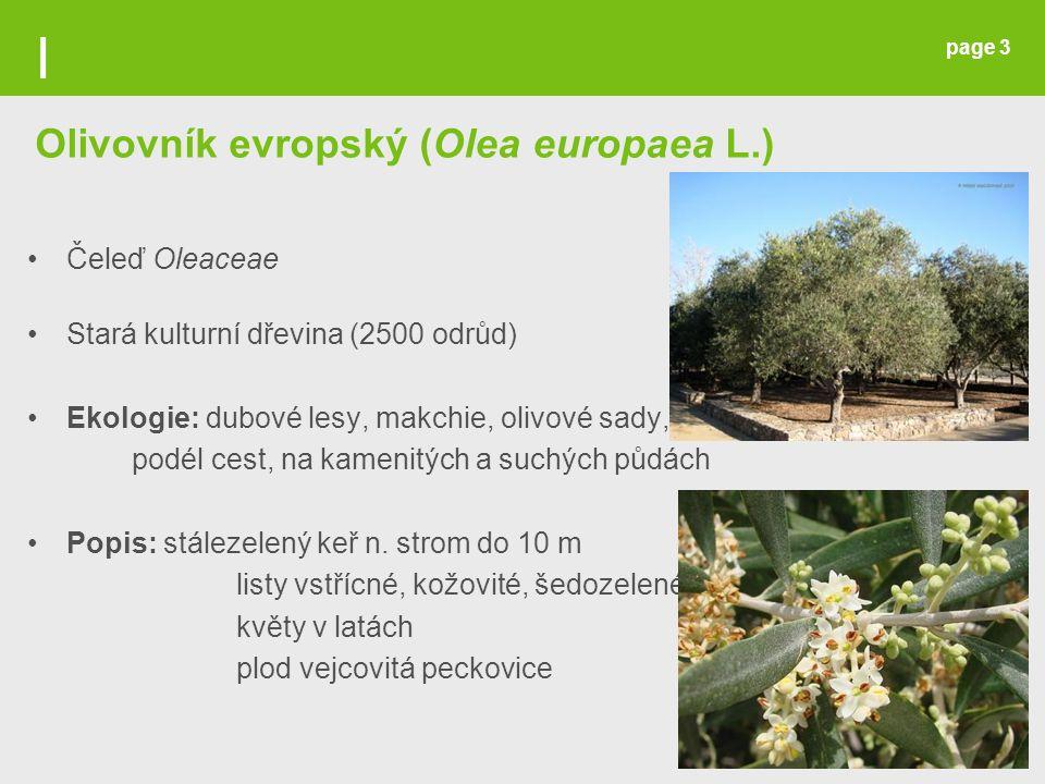 Olivovník evropský (Olea europaea L.)