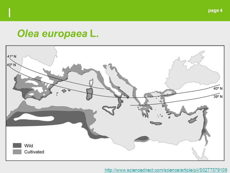 I Olea europaea L. http://www.sciencedirect.com/science/article/pii/S027737910900434X