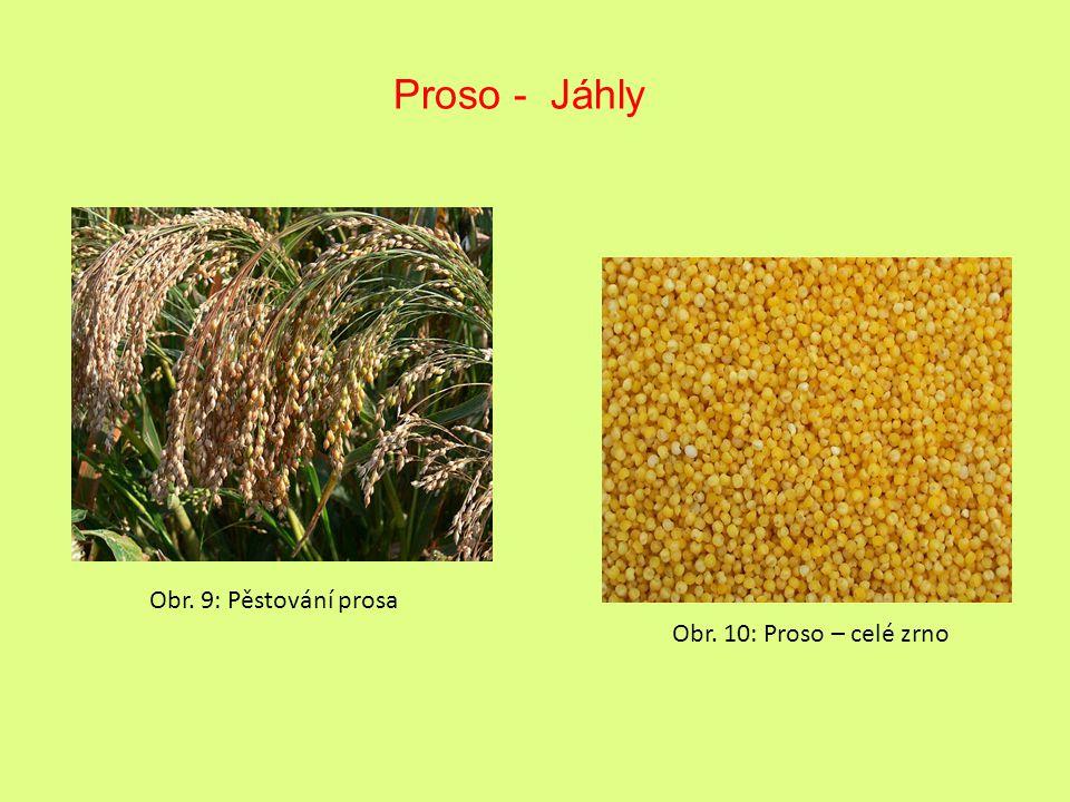 Proso - Jáhly Obr. 9: Pěstování prosa Obr. 10: Proso – celé zrno