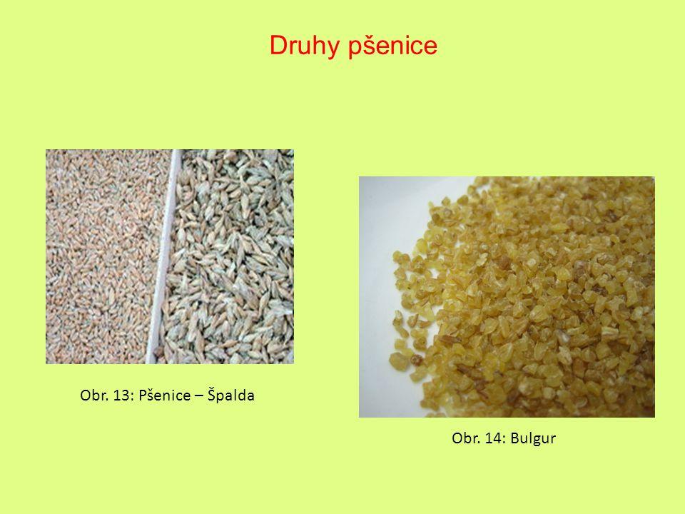 Druhy pšenice Obr. 13: Pšenice – Špalda Obr. 14: Bulgur