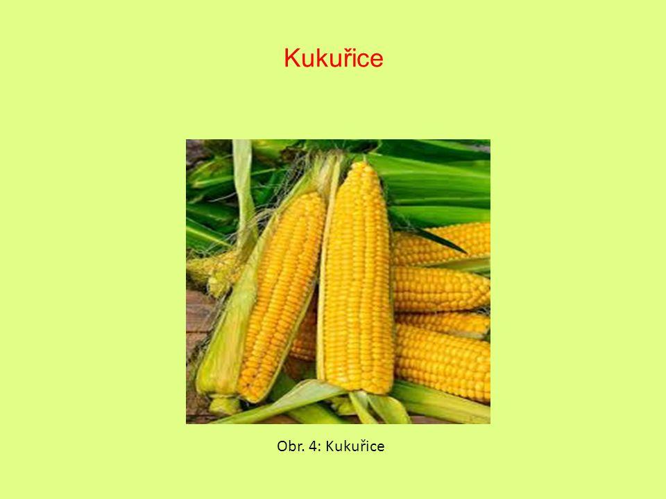 Kukuřice Obr. 4: Kukuřice