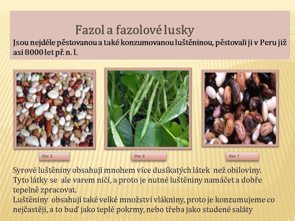 Fazol a fazolové lusky Jsou nejdéle pěstovanou a také konzumovanou luštěninou, pěstovali ji v Peru již asi 8000 let př. n. l. Syrové luštěniny obsahují mnohem více dusíkatých látek než obiloviny. Tyto látky se ale varem ničí, a proto je nutné luštěniny namáčet a dobře tepelně zpracovat. Luštěniny obsahují také velké množství vlákniny, proto je konzumujeme co nejčastěji, a to buď jako teplé pokrmy, nebo třeba jako studené saláty