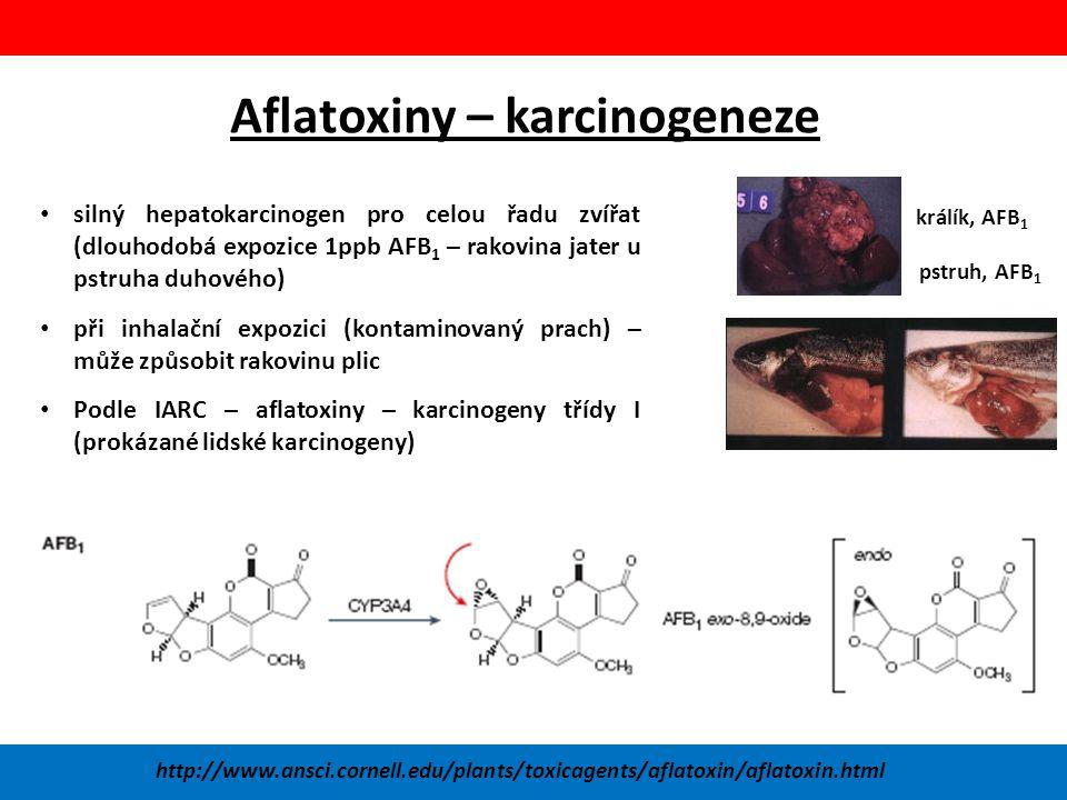 Aflatoxiny – karcinogeneze
