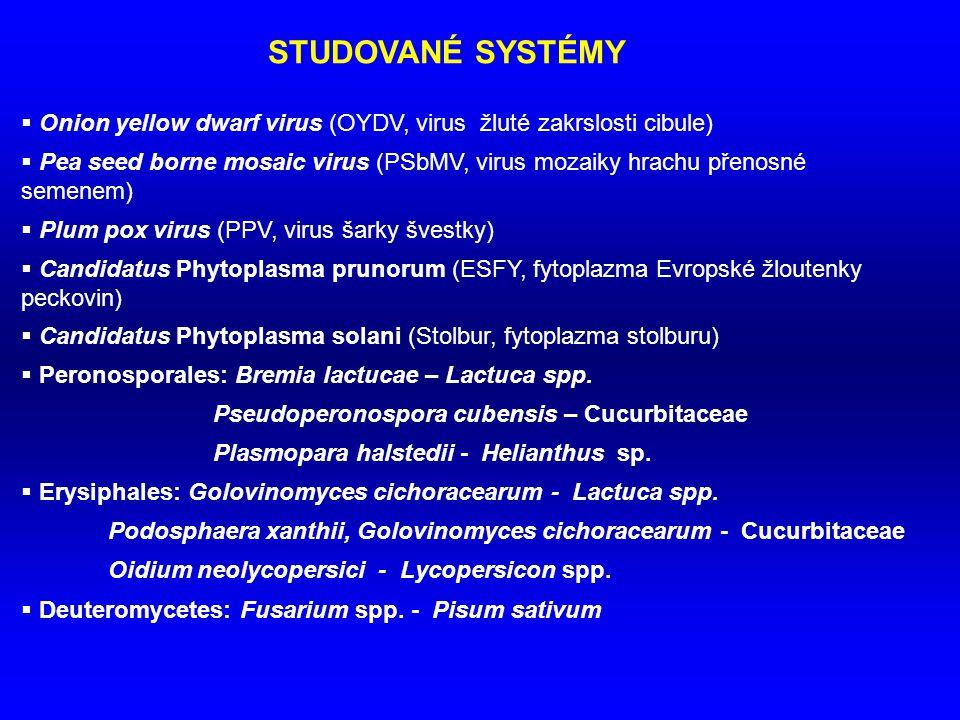 STUDOVANÉ SYSTÉMY Onion yellow dwarf virus (OYDV, virus žluté zakrslosti cibule)