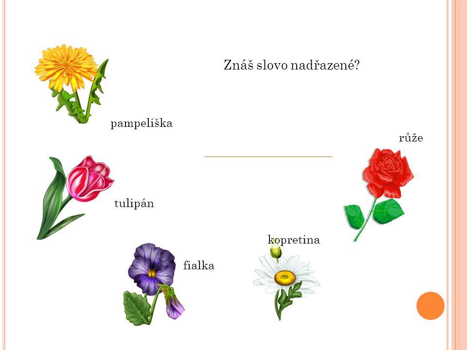 Znáš slovo nadřazené pampeliška růže tulipán kopretina fialka
