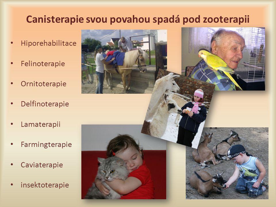 Canisterapie svou povahou spadá pod zooterapii