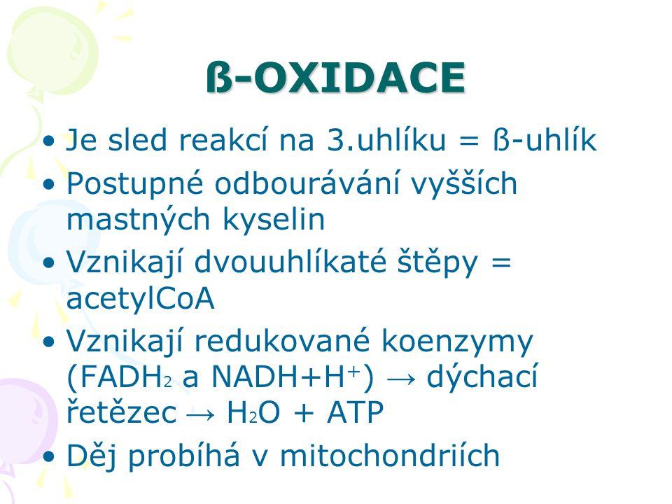 ß-OXIDACE Je sled reakcí na 3.uhlíku = ß-uhlík