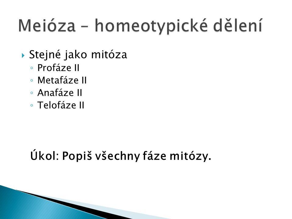 Meióza – homeotypické dělení