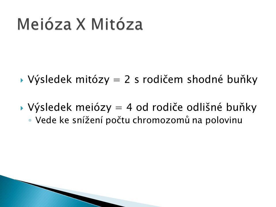 Meióza X Mitóza Výsledek mitózy = 2 s rodičem shodné buňky