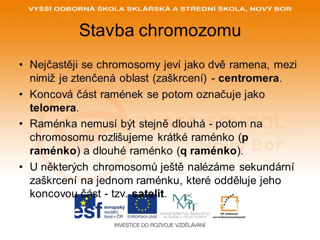 Stavba chromozomu Nejčastěji se chromosomy jeví jako dvě ramena, mezi nimiž je ztenčená oblast (zaškrcení) - centromera.