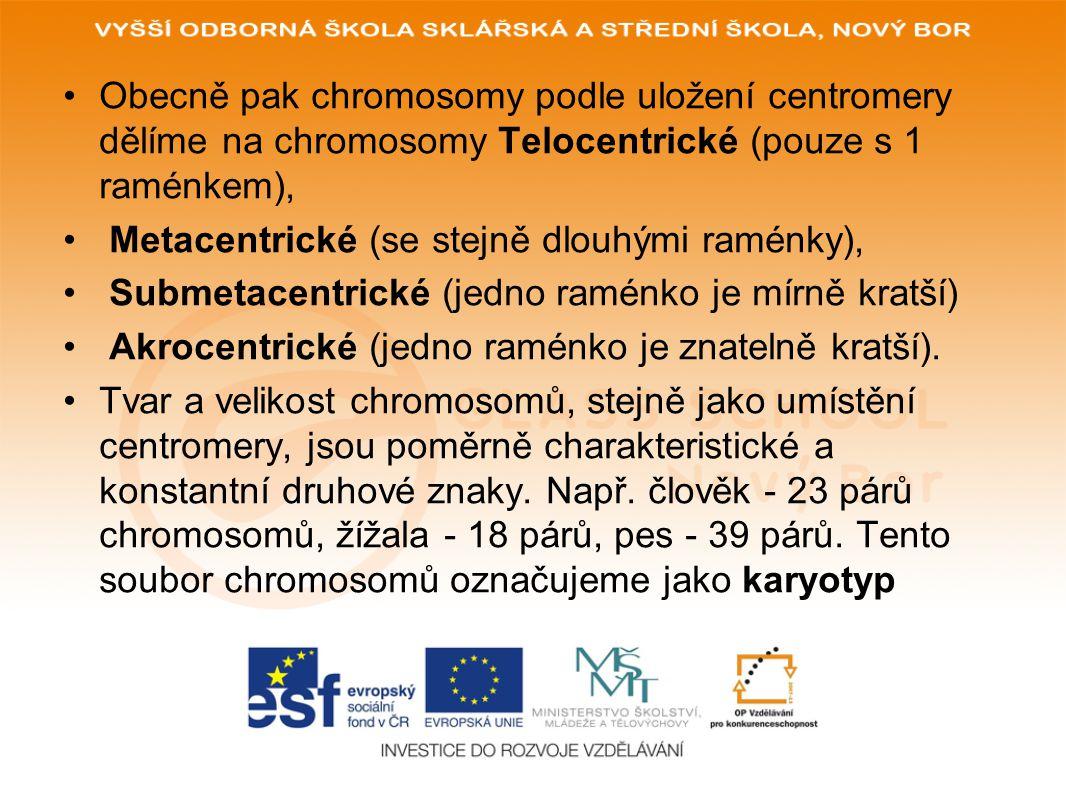 Obecně pak chromosomy podle uložení centromery dělíme na chromosomy Telocentrické (pouze s 1 raménkem),