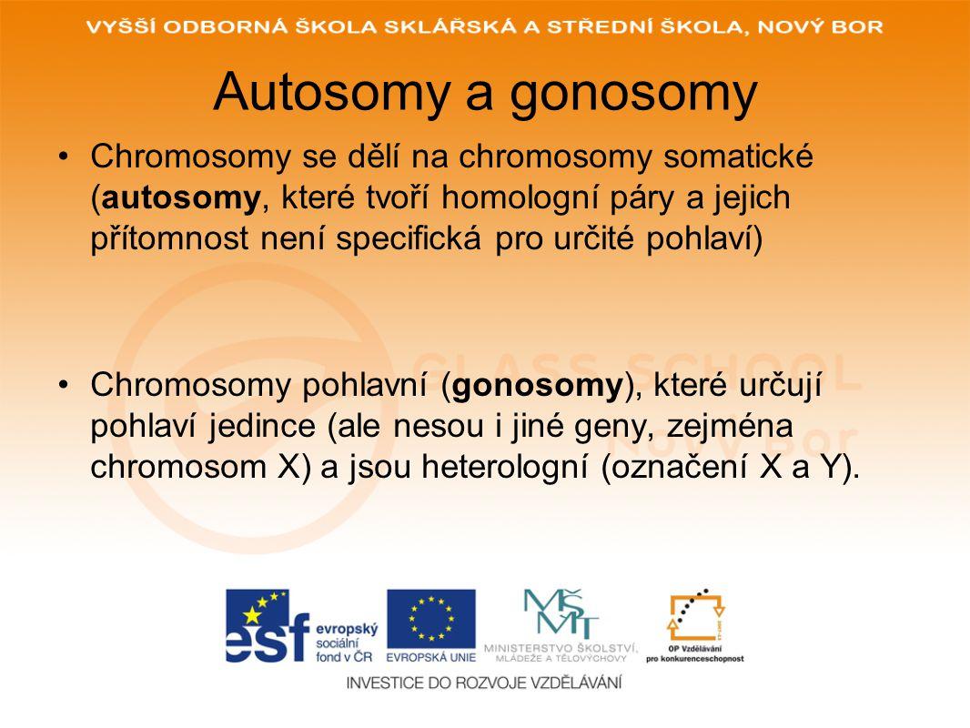 Autosomy a gonosomy