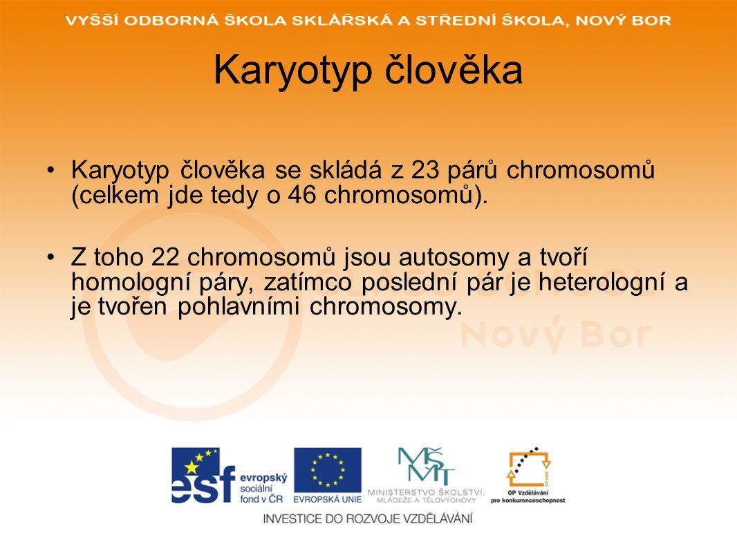 Karyotyp člověka Karyotyp člověka se skládá z 23 párů chromosomů (celkem jde tedy o 46 chromosomů).