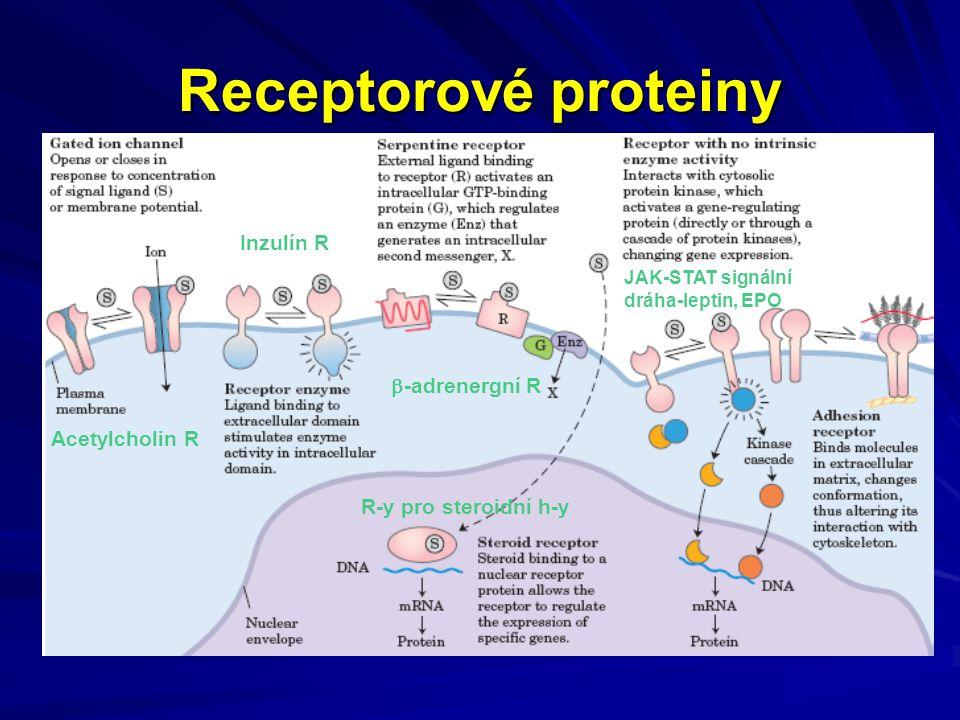 Receptorové proteiny Inzulín R -adrenergní R Acetylcholin R