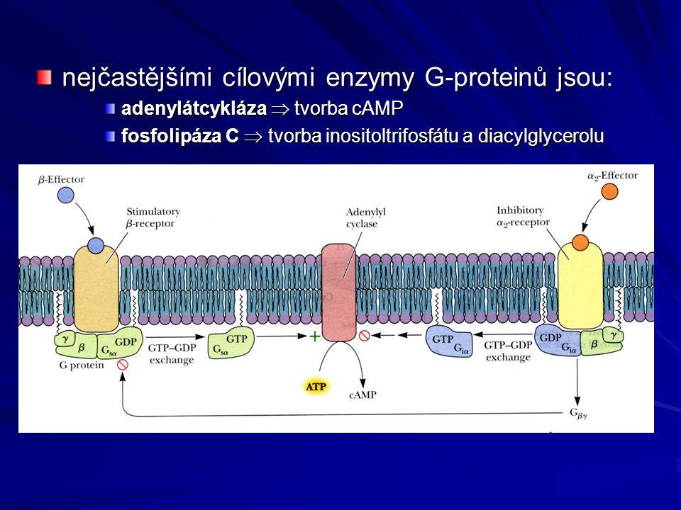 nejčastějšími cílovými enzymy G-proteinů jsou: