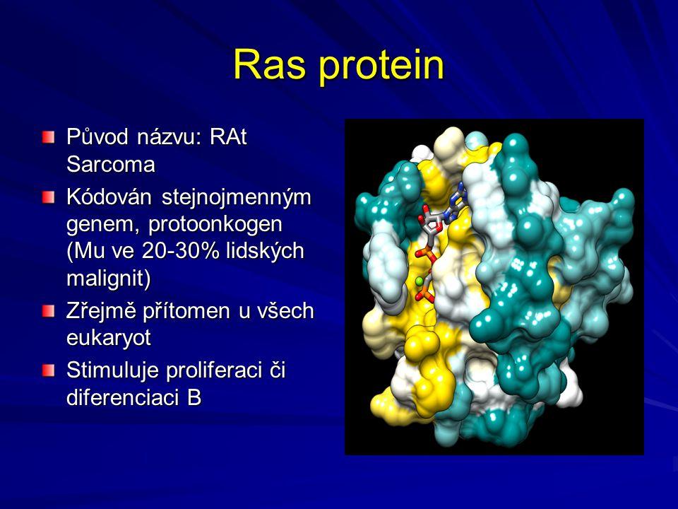 Ras protein Původ názvu: RAt Sarcoma