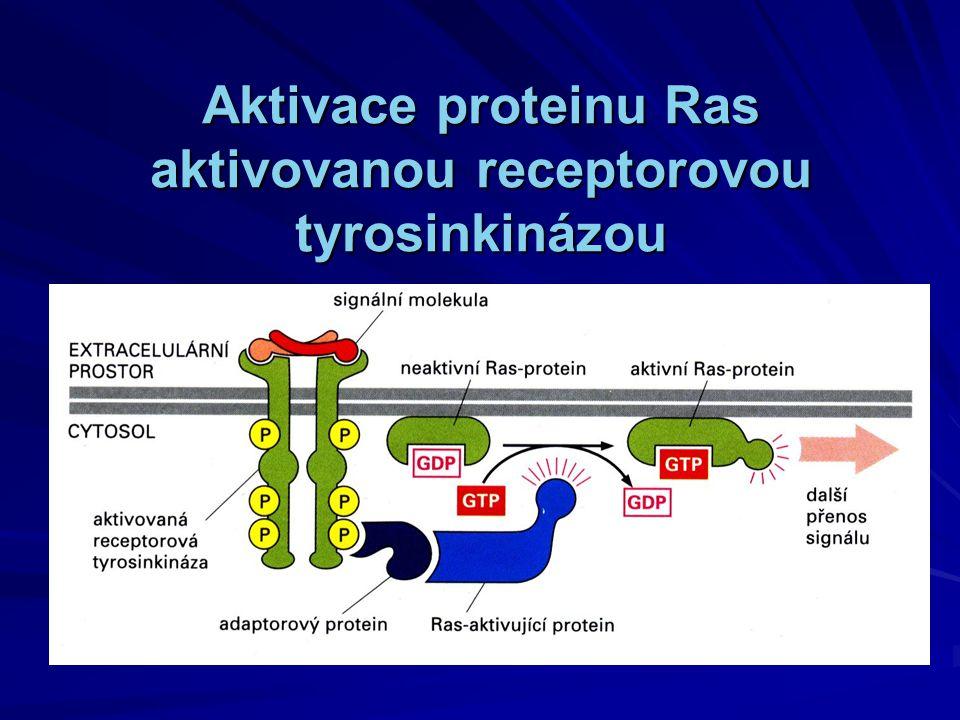 Aktivace proteinu Ras aktivovanou receptorovou tyrosinkinázou