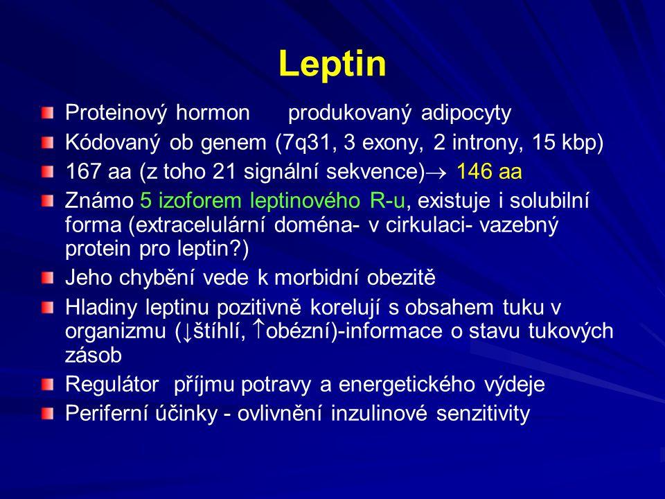 Leptin Proteinový hormon produkovaný adipocyty