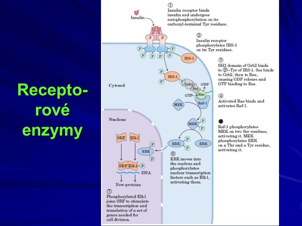 Recepto-rové enzymy