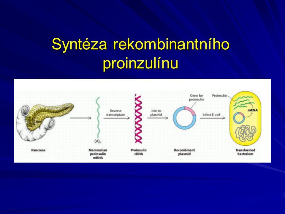 Syntéza rekombinantního proinzulínu