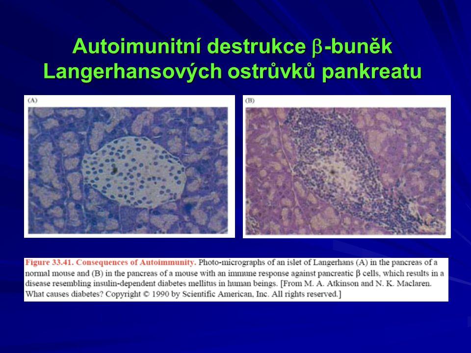 Autoimunitní destrukce -buněk Langerhansových ostrůvků pankreatu