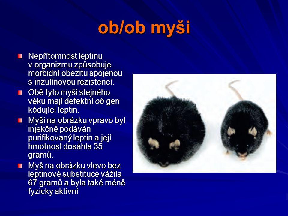 ob/ob myši Nepřítomnost leptinu v organizmu způsobuje morbidní obezitu spojenou s inzulínovou rezistencí.